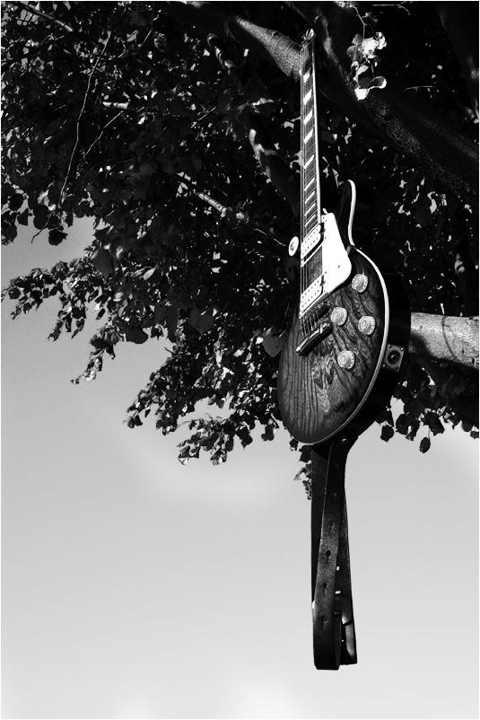 music'n'nature pt. 4