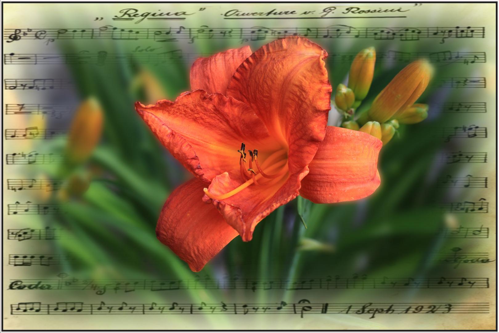 Musikalische Lilie