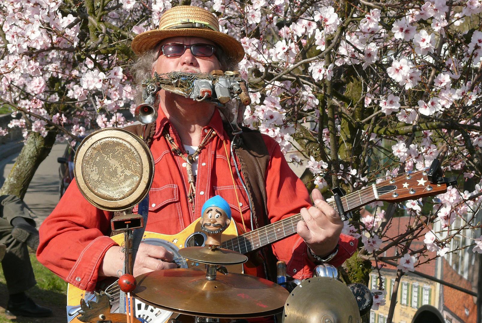 Musikant bei der Mandelblüte