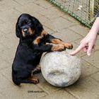 Muß ich mit dem Ball spielen?