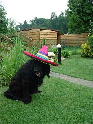 Muß ich schon wieder zu dieser langweiligen Gartenparty.....
