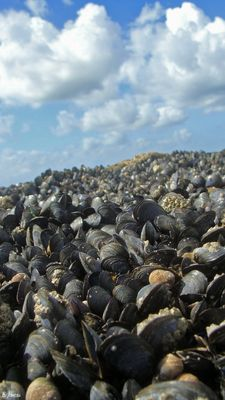 Mussel Valley