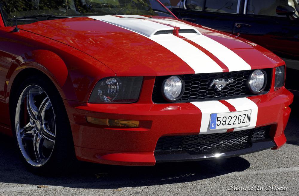 ...Mustang...