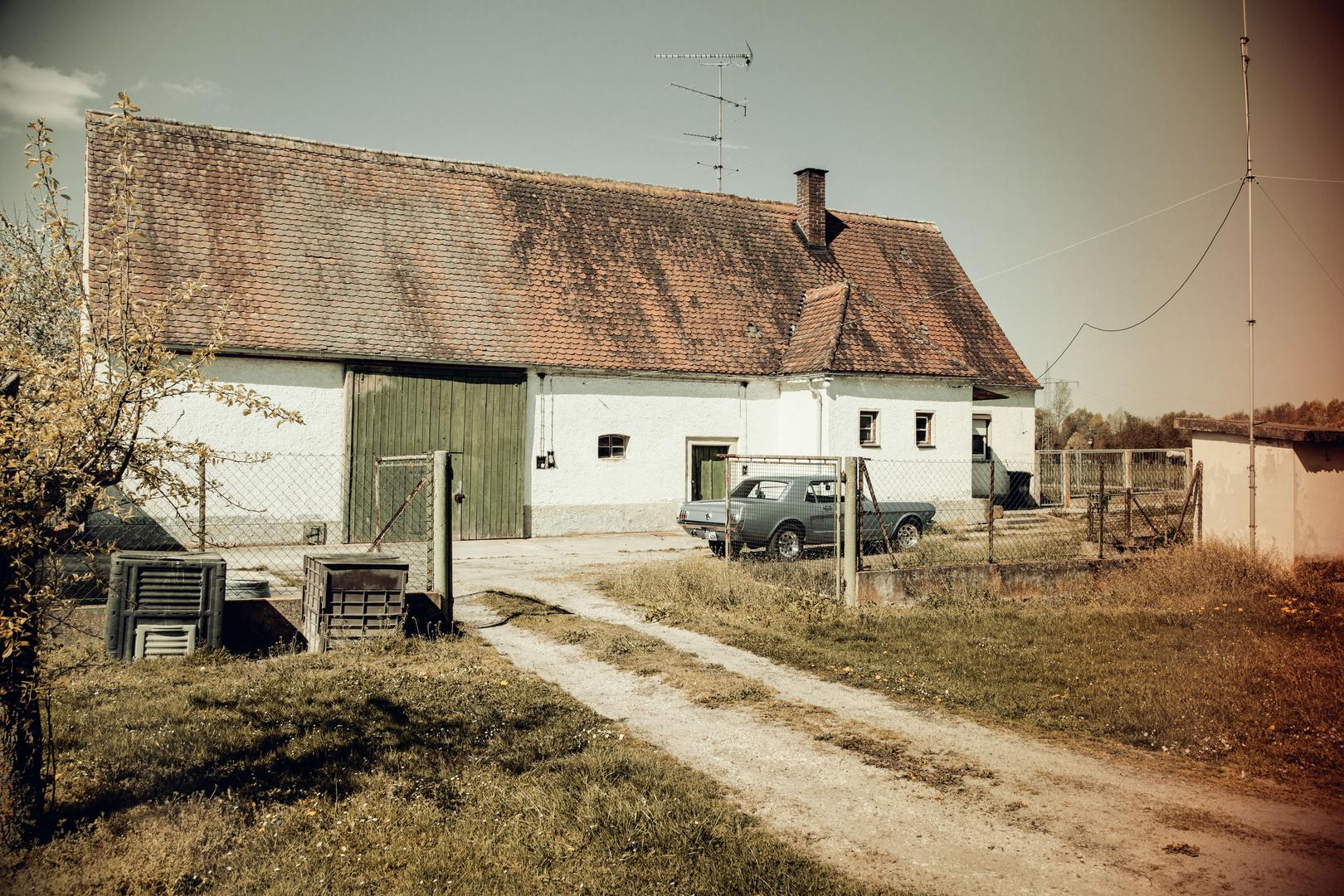 Mustang in a Farm