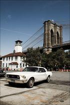 Mustang in Brooklyn
