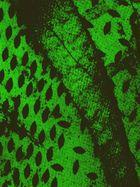 Muster in Grün
