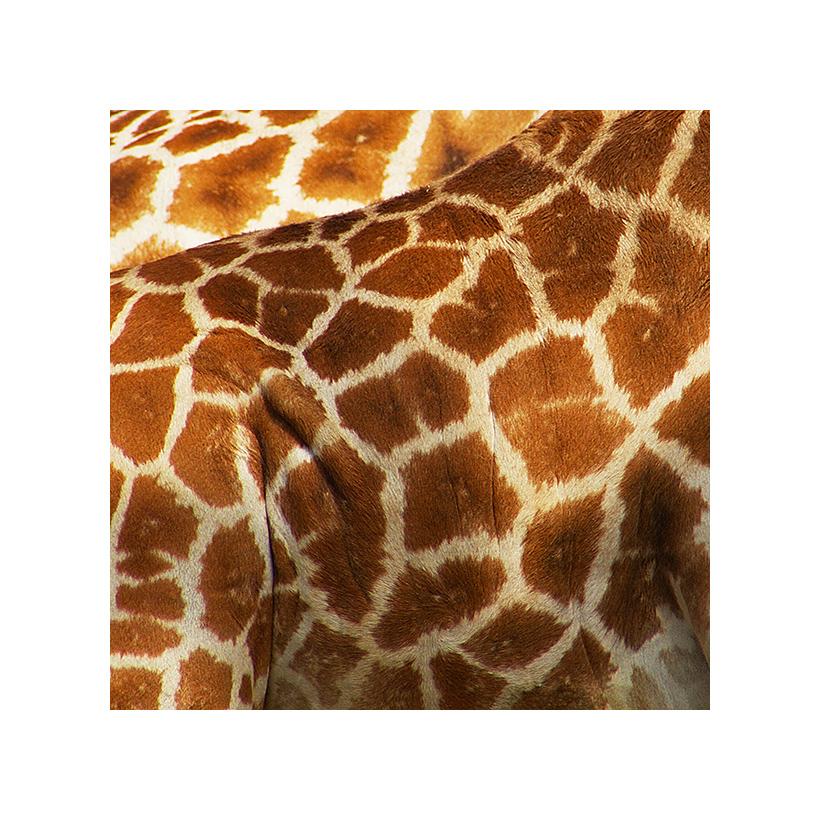 Mustergiraffe I