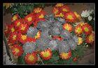 Mutación floral