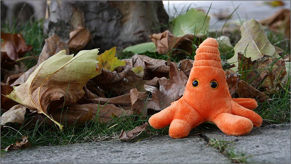 Mutant Amöbius und der Herbst