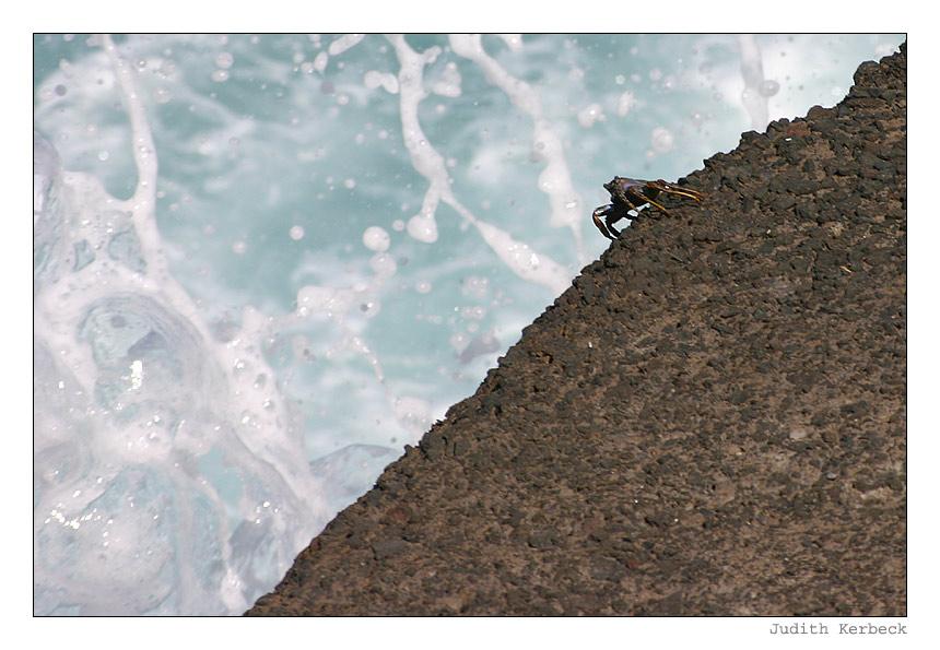 Mutige Krabbe