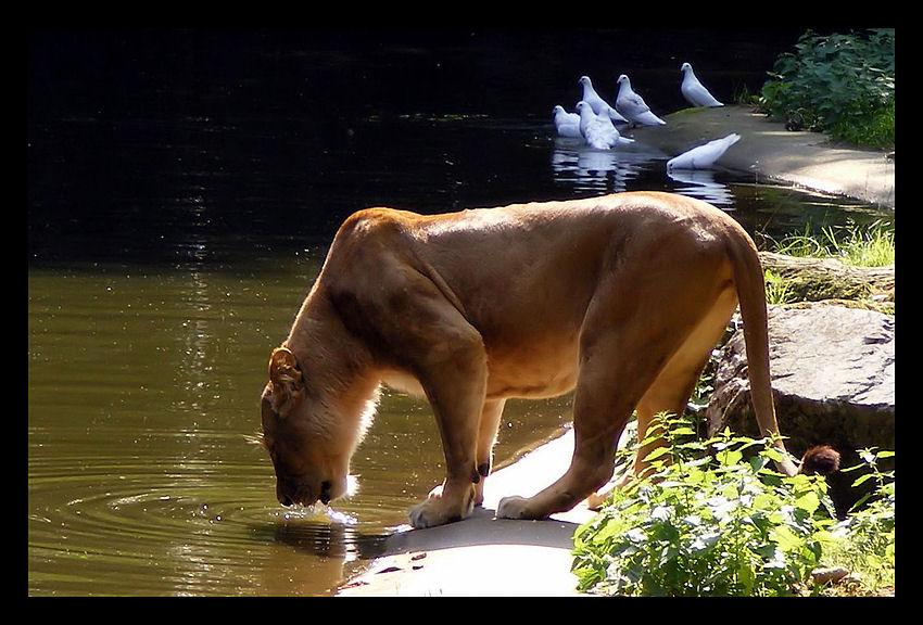 Mutige Tauben.....