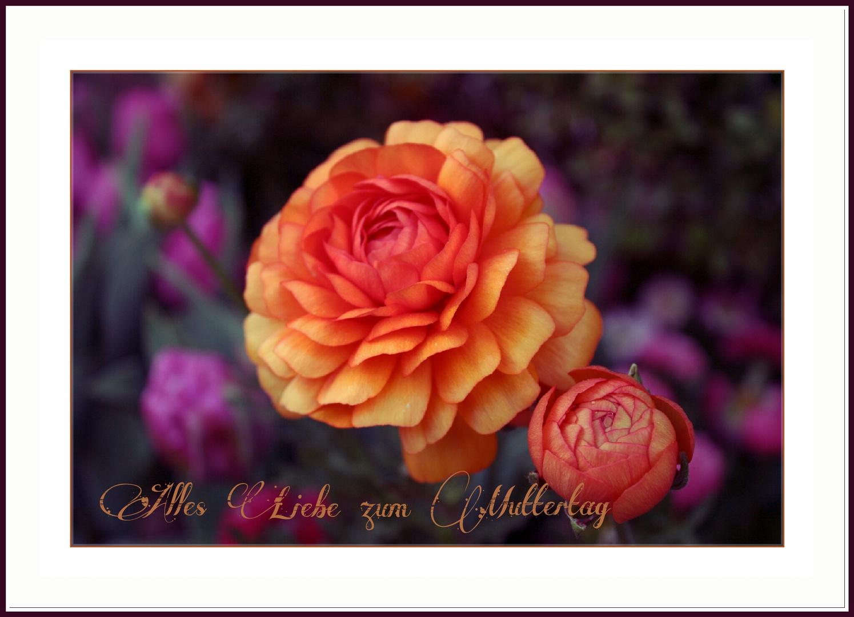 Mutter Foto & Bild | gratulation und feiertage, muttertag, karten ...