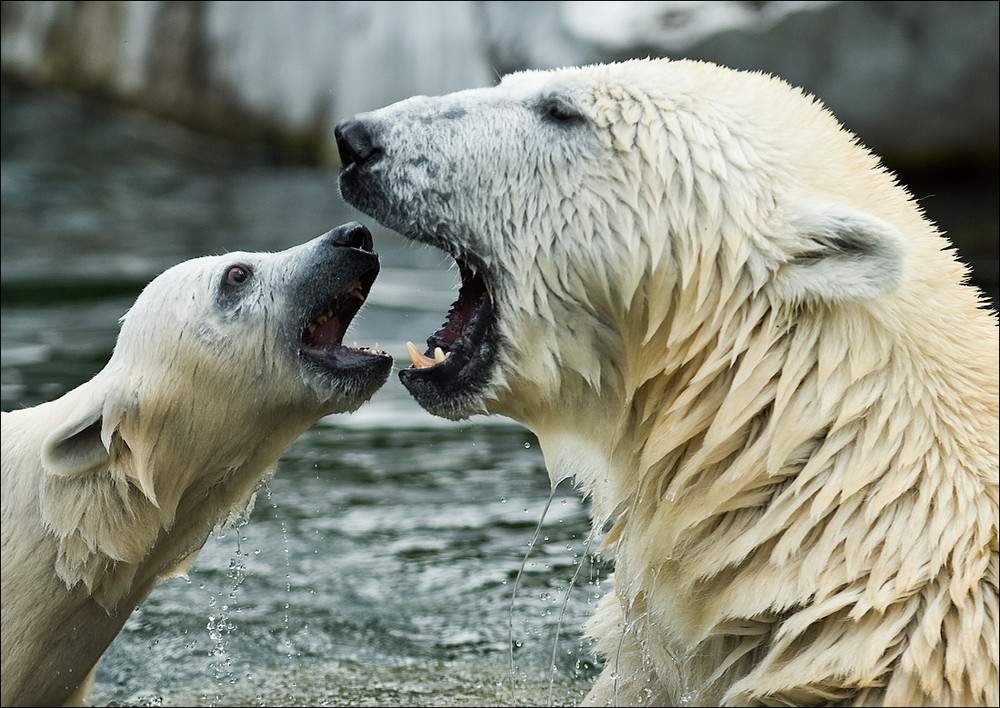 Mutter, hast du aber ein großes Maul !