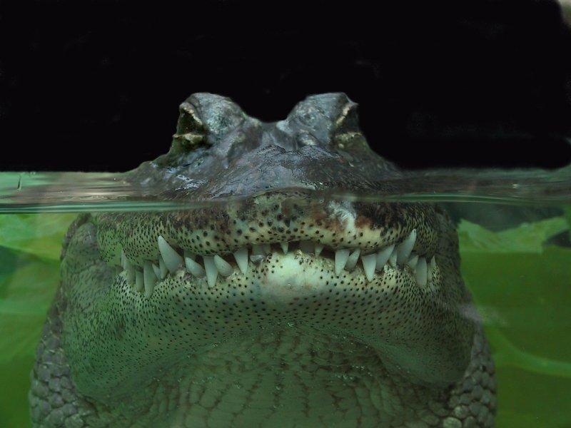 Mutter Krokodil