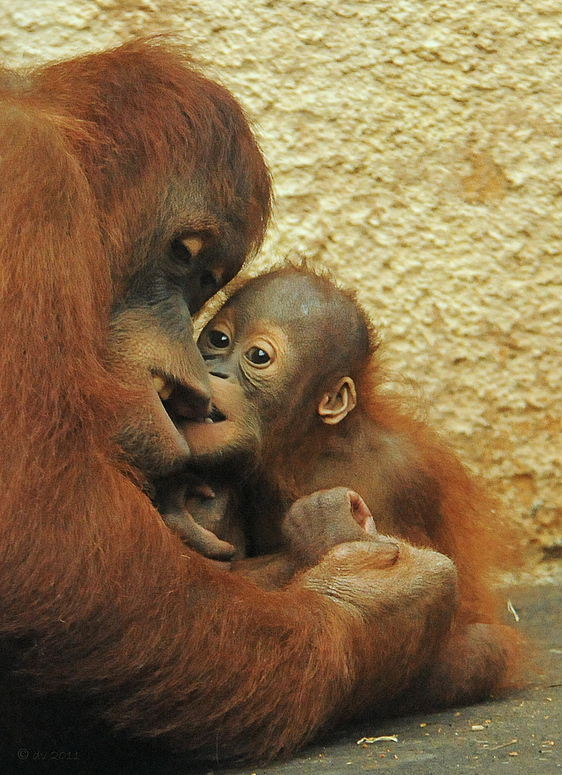 Mutter mit Kind