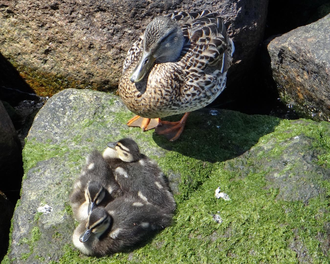 Mutter mit Kind.