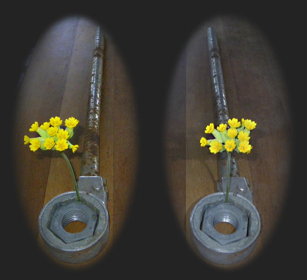 Mutter-Schlüssel-Blümchen