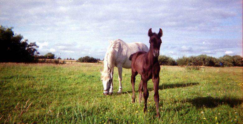 Mutter & Sohn I