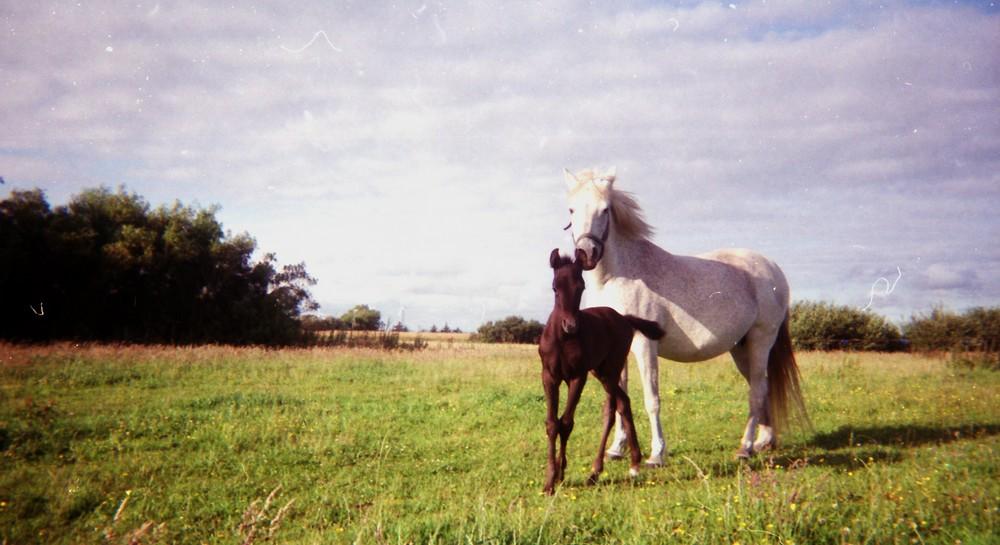 Mutter & Sohn II
