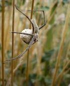 Mutter Spinne