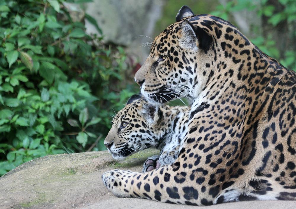 Mutter und Sohn