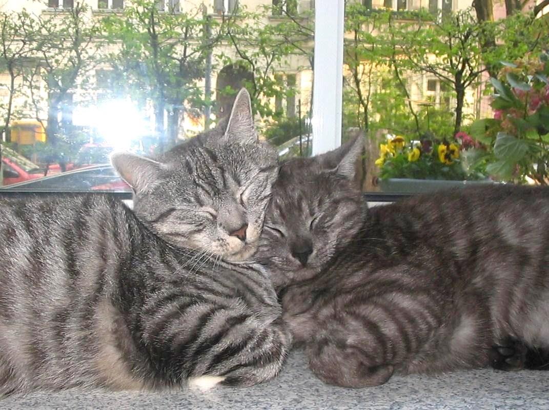 Mutter und Tochter - Mittagschläfchen