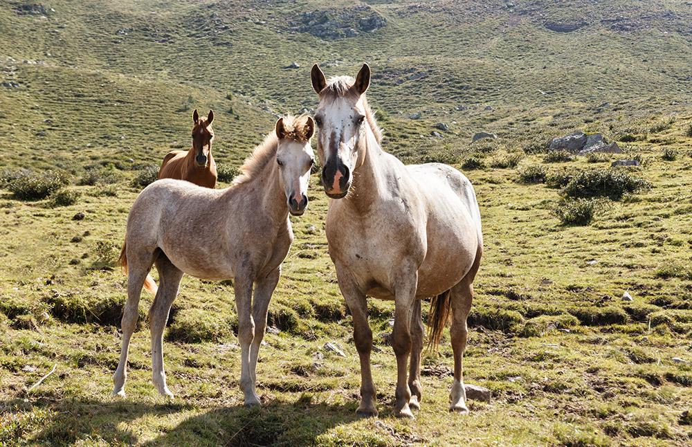 Mutter und Tochter, Pferde in Italien