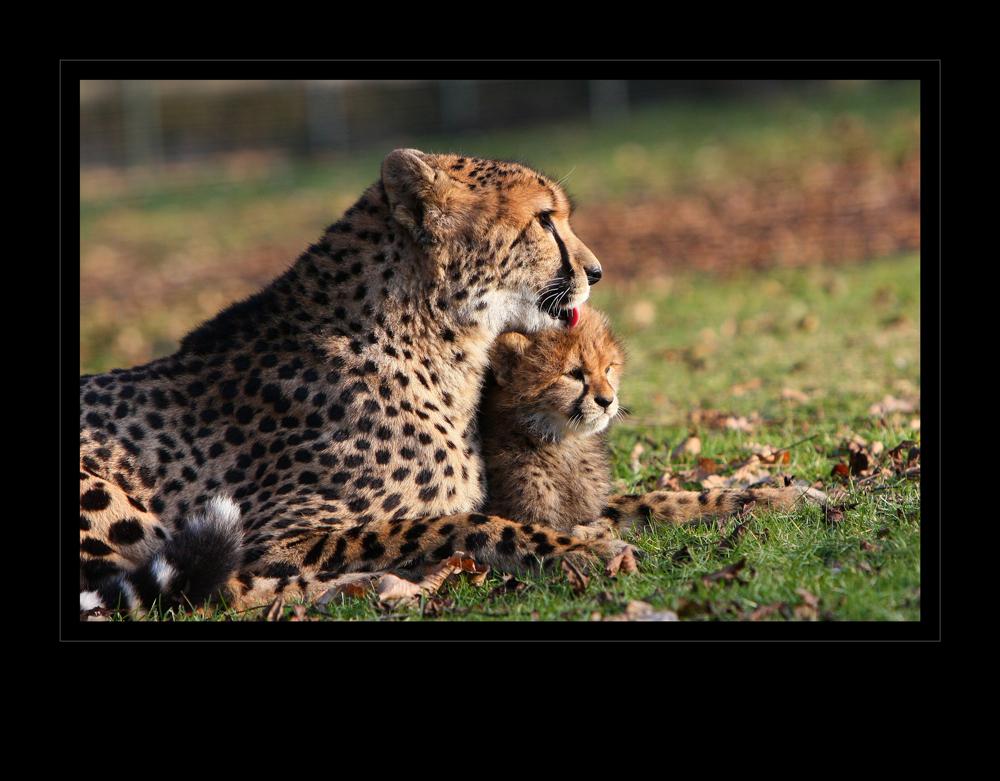 Mutterliebe
