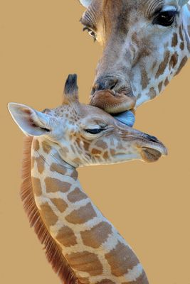 Mutterliebe beim 1 Wochen alten Baby