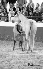 Mutterliebe - Cartujano-Mutterstute mit Fohlen