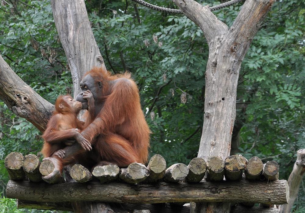 Mutterliebe gibt es auch im Zoo..........