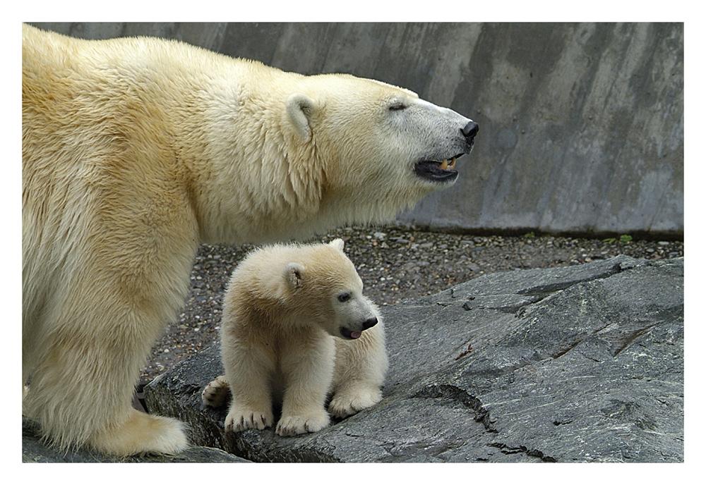 Mutterschutz für Wilbär....