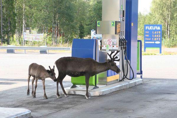 Mutti, das ist eine Tankstelle !