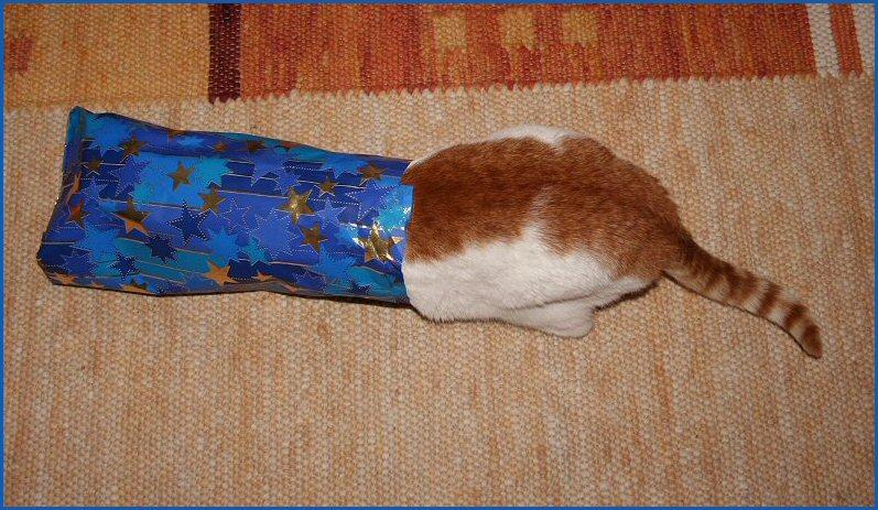 Muzi wollte sich als Weihnachtsgeschenk verpacken...