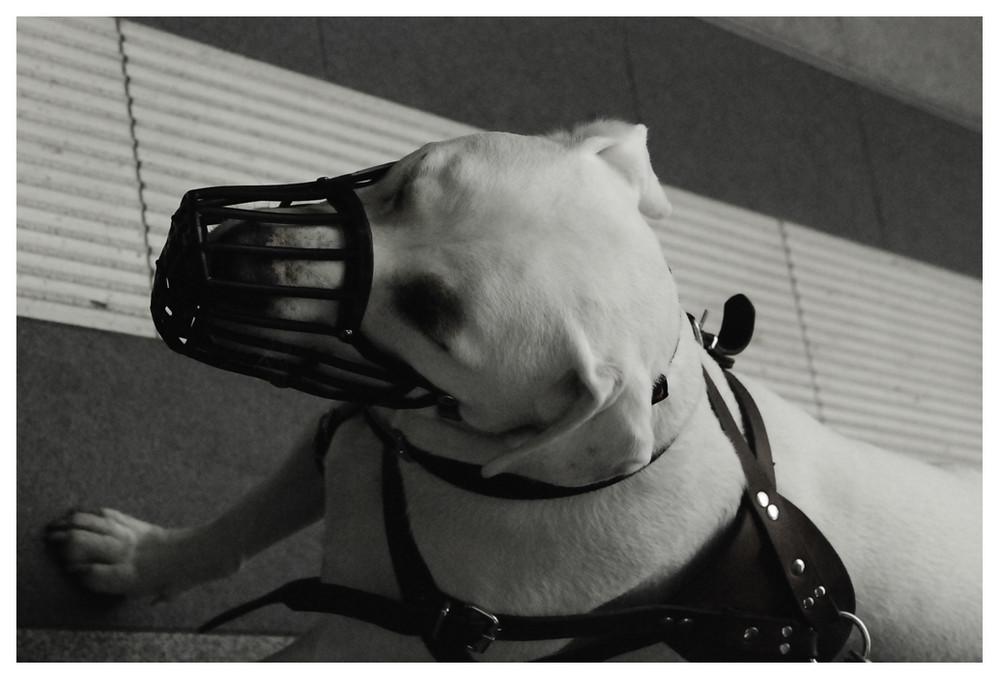 Muzzle-dog.