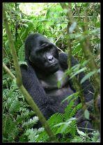 Mwirima, Bwindi Nationalpark, Uganda