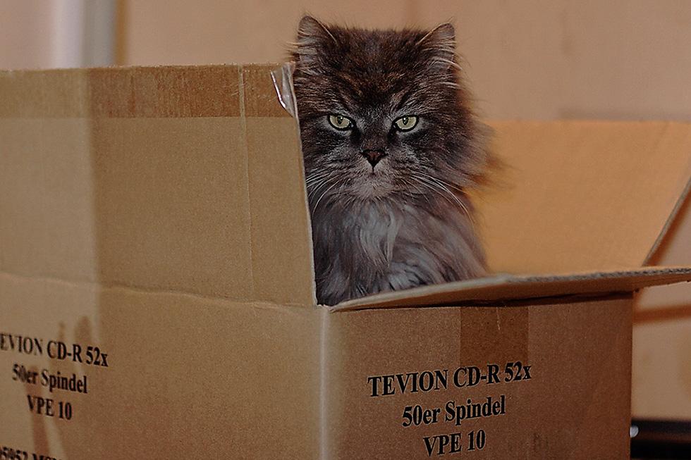 My ALDI Karton is my Castle