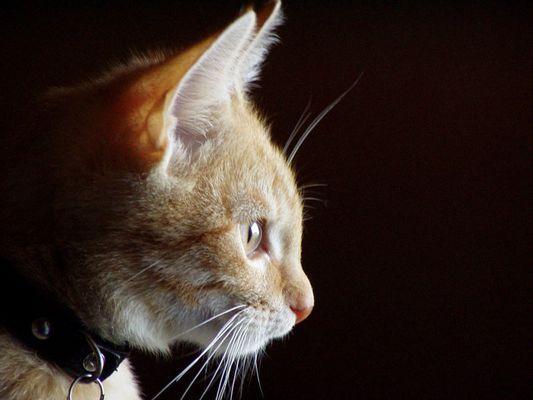 My beautiful cat ;-)