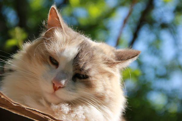 My best Cat Ira