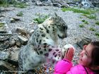 My best friend-snow leo