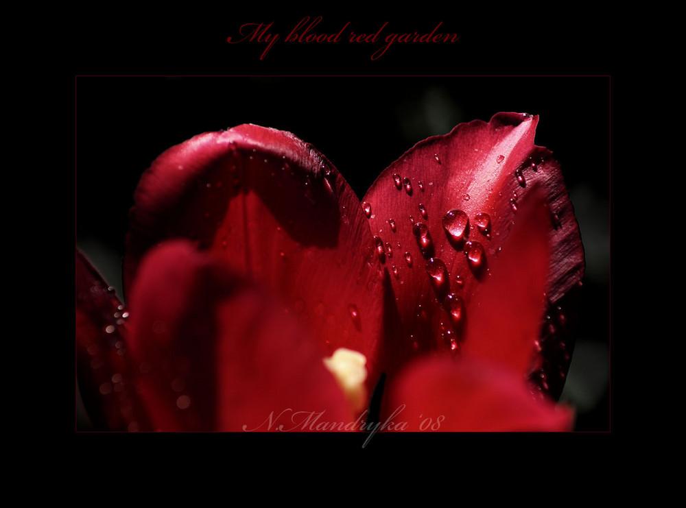 my blood red garden