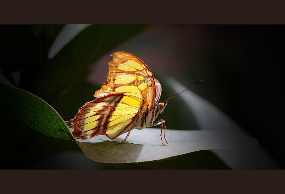 my butterfly...