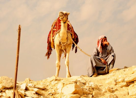 My Camel and me