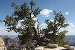 My Canyon Tree - 2 -