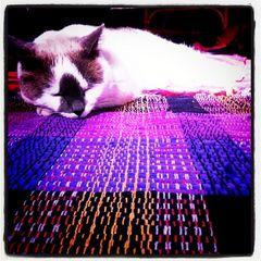 my cat Jamiro