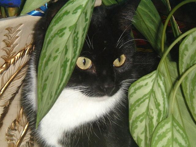my cat maja so sweet