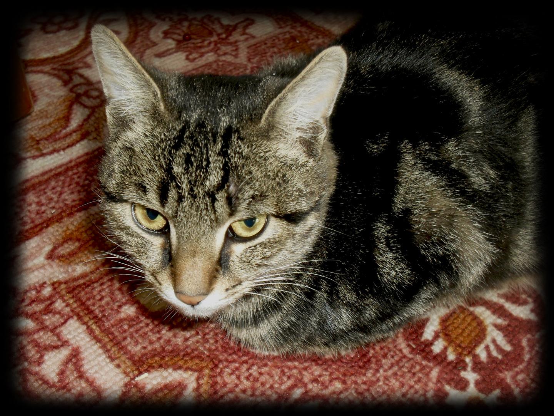 My Cat name Veyr :)