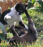 my cats playing or fighting?