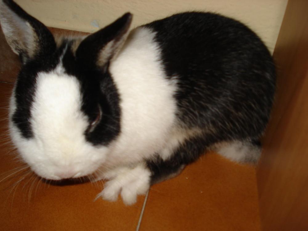 my coniglio!!