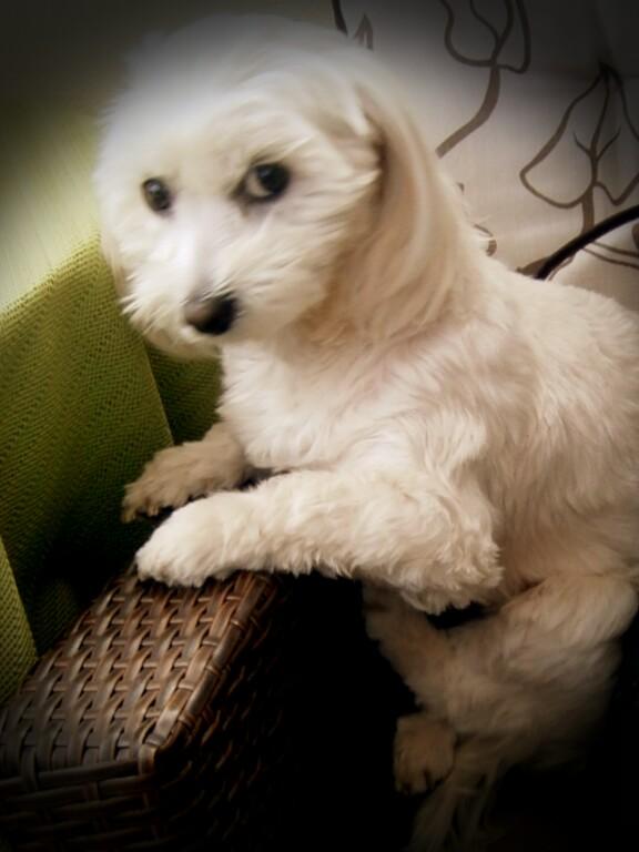 my darli Dog Jinna